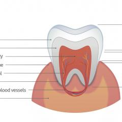 Enamel is the protective outer layer of our teeth